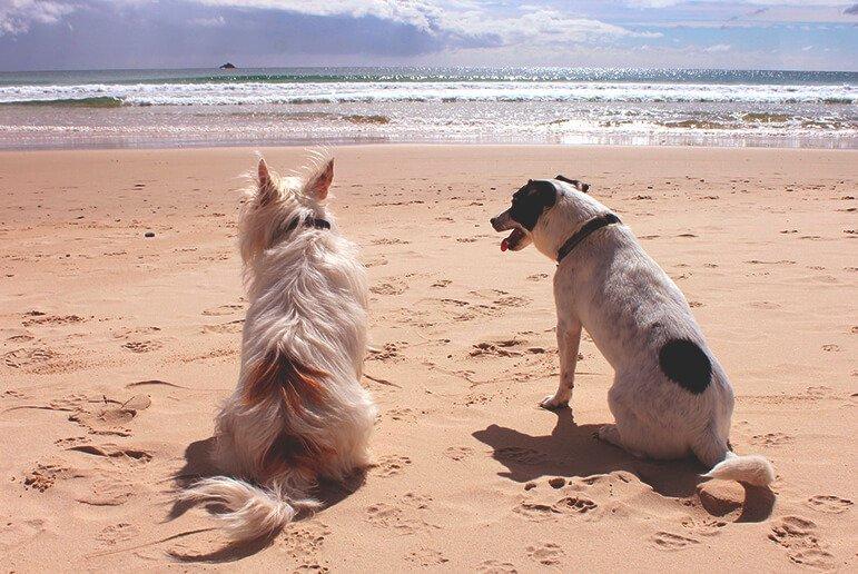 Playas para perros en Tenerife 1