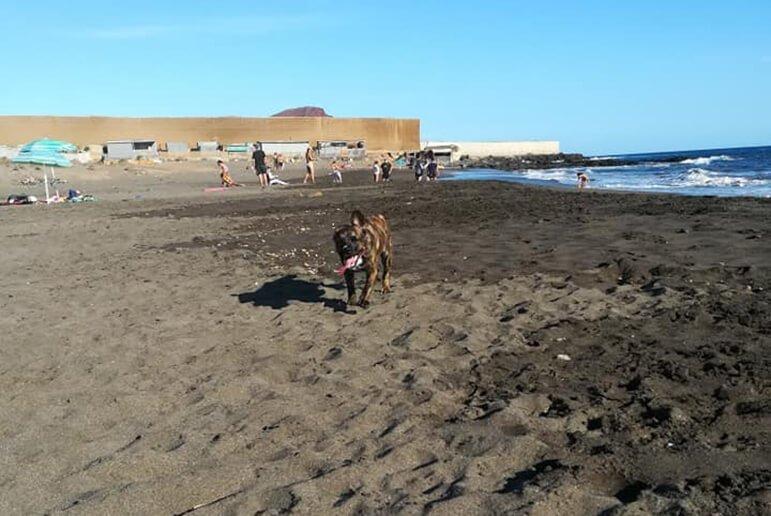 Perros: Playa El Horno o El Confital 1