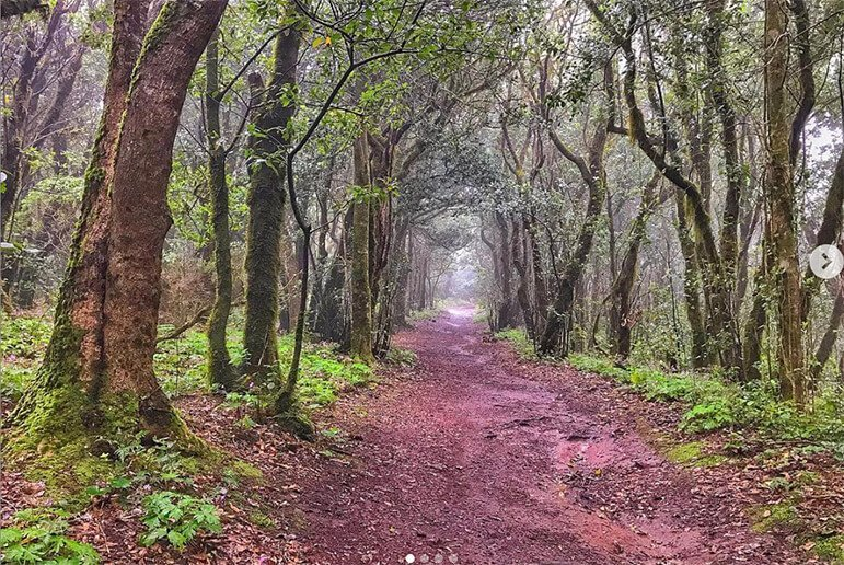 Sendero del Bosque Encantado 1