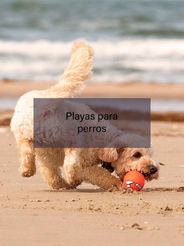 Leer: Playas de Tenerife para todos los gustos